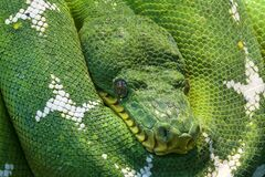 Photo of Green and White Snake Stock Image
