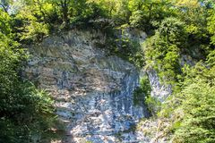 Photo of growing green trees on rock. Summer Royalty Free Stock Images