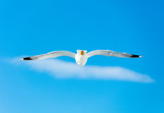 Photo of the gull Stock Image