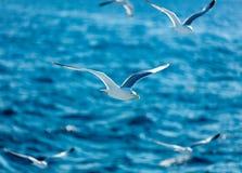 Photo of the gulls Stock Photo