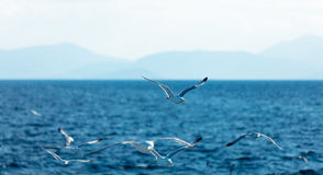 Photo of the gulls Stock Images