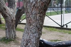 Some Trees at Park and Basketball Court. Photo has taken from Buca/Izmir. A park shoot with trees and baskeball court stock photography