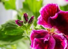 Photo haute étroite de belles fleurs image libre de droits