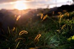 Photo haute étroite de champ sur le coucher du soleil photos stock