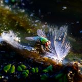 Photo haute étroite de mouche verte laide images libres de droits