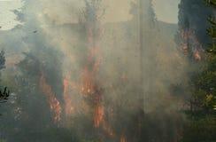 Photo haute étroite du feu de forêt, arbres brûlants Photos stock