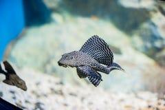 photo haute de fin de poissons d'aquarium photo stock