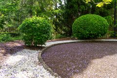 Garden hedges in circular garden royalty free stock image