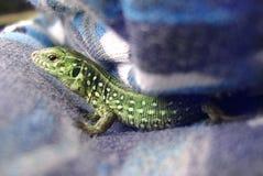 Photo hiding lizard close-up Stock Photo
