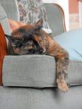Daisy the lazy cat on her favourite sofa Royalty Free Stock Photos