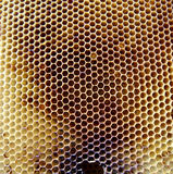 The photo honey. The photo shows beehive honey nectar hive swarm winged bee honeycomb wax private apiary beekeeper beeswax.Beehive honey for beeswaxes honeycombs Royalty Free Stock Photography