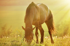 Photo horse backlit Royalty Free Stock Photos