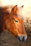Photo of the horse Stock Photo