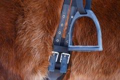 Photo of horse with saddle and stirrup Stock Photography