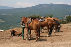 Photo of horses in a farm. With mountain in background Royalty Free Stock Photo