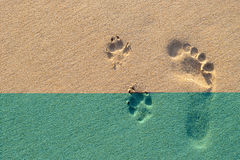 Human footprint beside dog footprint on the tropical beach. Photo of human footprint beside dog footprint on the tropical beach Royalty Free Stock Image