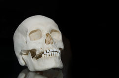 Photo of a human skull Stock Photos