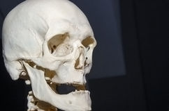 photo of a human skull Royalty Free Stock Images
