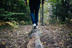 Photo of Human Walking in the Woods during Daytime Stock Photo
