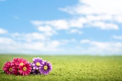 Photo-illustration of flowers on meadow Royalty Free Stock Image