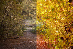 Photo before and after the image editing process. Autumn forest Royalty Free Stock Photo