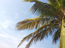 Coconut tree branches fly in blue sky royalty free stock image