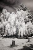Photo infrarouge d'un cimetière image libre de droits