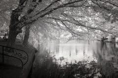 Photo infrarouge de l'étang de canard au stationnement de Laurelhurst à Portland, image stock