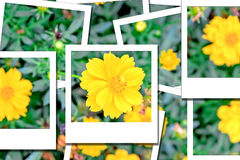 Photo instantanée 2 de Comos Photo libre de droits