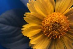 Photo jaune de fleur Photos stock