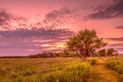 Meadow Hiking Trail At Sunset. Photo just as the sun is setting on a hiking trail near Orangeville, Ontario, Canada royalty free stock photography
