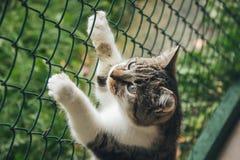 Animal shelter in Liepaja, Latvia. Stock Image