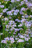 Photo by lavender chamomile on background of blur bouquet Royalty Free Stock Photo