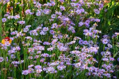 Photo by lavender chamomile on background of blur bouquet Stock Photos