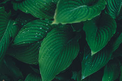 Photo of Leaves With Rain Dew Stock Photo