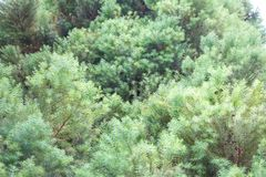 Photo of light green vegetation Royalty Free Stock Image