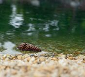 Pine cone in water stock image