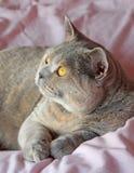 Full of wonder cat Royalty Free Stock Image