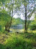 Lush green vegetation next to a river. Photo of lush green vegetation next to a river royalty free stock photo