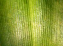 Photo macro green leaf Stock Image