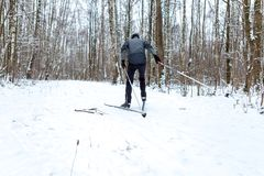 Photo of male skier in gray jacket. In winter forest Royalty Free Stock Image
