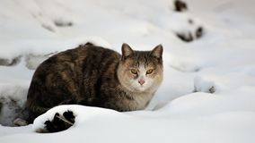 Cat with snow Stock Photo