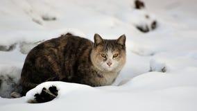 Cat with snow Stock Photo