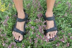 Photo of man feet in sport sandals on green grass and blooming flowers background stock photography