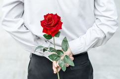 Photo of man holding a red rose behind his back Stock Photography