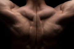 Photo of man's muscle back Stock Photography