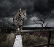 Photo Manipulation, Cat, Photoshop Stock Image
