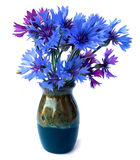 Photo manipulation oil paint blue cornflower in ceramic vase. Photo manipulation oil paint blue cornflower perspective, delicate flowers and petals isolated on Stock Images
