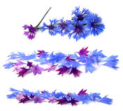 Photo manipulation oil paint blue cornflower  isolated Royalty Free Stock Photography