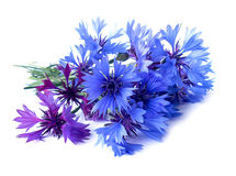 Photo manipulation oil paint blue cornflower  isolated Stock Images